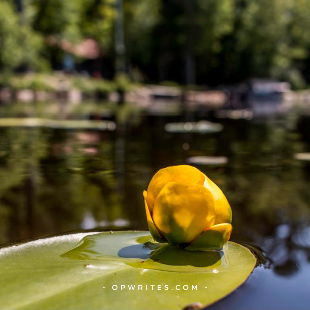 Lakes in Huntsville Ontario